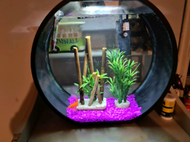 Fish tank, filter and touch lighting