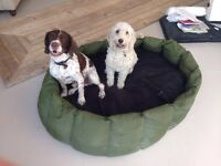 Tuffie dog bed - XXL, DELIVERY INCLUDED!