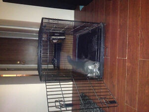 Dog cage brand new