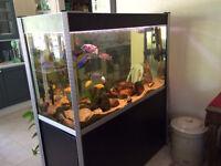 Fluval Profile 1200 Designer Aquarium