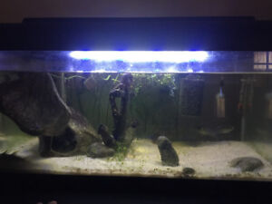 Aquariums for sale 10 Gallon and 8 Gallon
