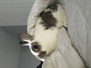 Bunnies for sale!!