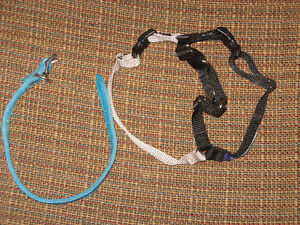 Easy Walk Harness and Collar.