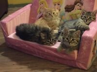 Beautiful kittens to give away