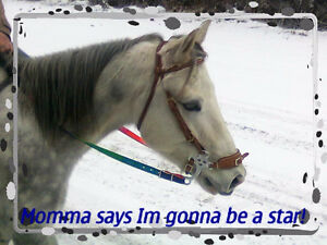 Register quarter horse gelding