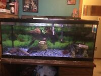 Fish tank for sale 75 gal