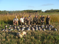 EARLY SEASON GOOSE GUIDED HUNT