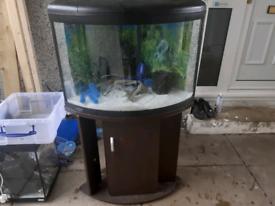 UFO 550 fish tank