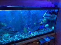 55-60 gallon fish tank