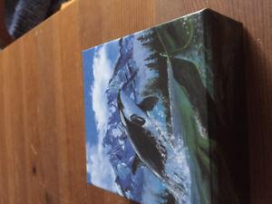 Orca coin