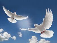 White doves needed