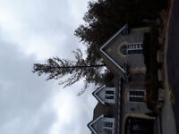 Trees By Two Guys Tree Services and Landscaping