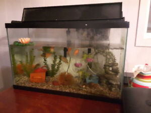 30 Gallon tank with parrotfish