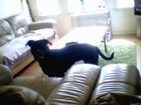 Rehome dog girl