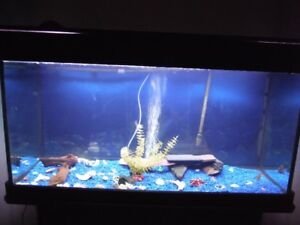 Large and small aquariums for sale with all accessories
