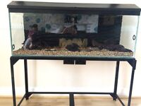 4 ft fish tank / 3D background and stand £150 Ono