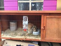 Rabbit with 2 cages
