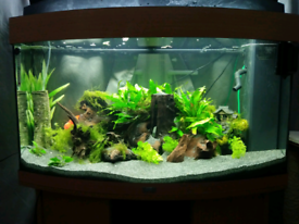Juwel fish tank 180 litres