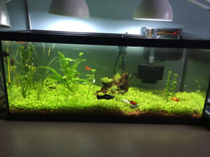 Beautiful planted Fish Tank. Everything Included!