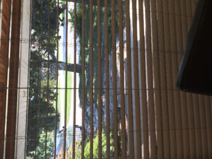 Free wooden horizontal blinds