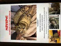Lost my cat -- please help me find her