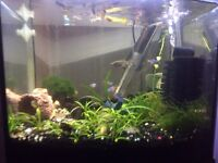 For sale fish tank and fish