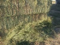 Large square bales grass hay. Approx $210/ton Delivered Weyburn!
