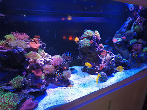 Saltwater fish and corals for sale