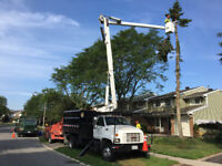 TREE REMOVAL + STUMP GRINDING SERVICE * fully insured + equipped