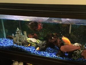 Assorted Colorful Tropical Cichlids Fish