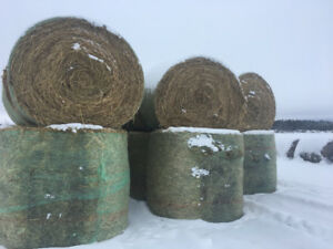 Green Feed Oat Bales For Sale