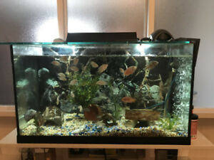 4 Fish Tank included Goldfish and Cichlids