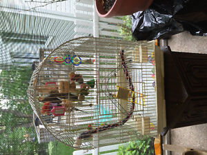 REDUCED PRICE-Pair of Cockatiels including Accessories