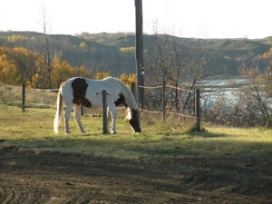 Horse Boarding available 15km south on Lorne Ave, #219