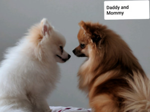 Adopt Dogs & Puppies Locally in British Columbia | Pets ...