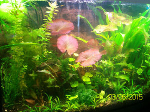 Aquarium cleaning & care