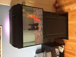 SOLD! 20 Gallon Aquarium set up with 5 fishes!