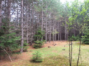 Build Your Cottage on this Beautiful Summer Cottage lot on PEI