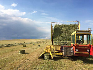 Hay Bales - Top Quality Timothy Small Squares