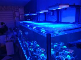 Marine led light ai hydra 32