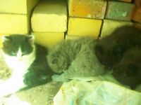 4 chatons à donner cherche bonnes familles