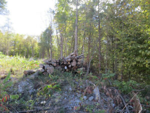 Firewood and logs (FREE, alsmost!)