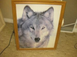 Large framed photo/print of wolf