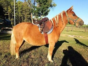 4 yrs old miniture mare for sale Cornwall Ontario image 3