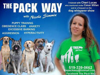 $50 OFF DOG TRAINING CLASS STARTING THIS Thurs, May 28 @ 7 PM