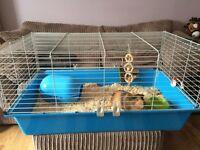 Guinea pig cage