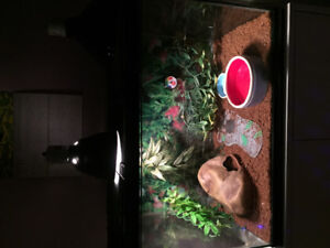 Looking to home a female leopard gecko