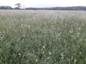 Standing hay for sale approx 70 acres