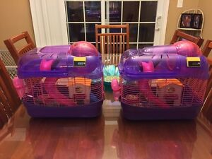 2 female winter white hamsters with cage and accessories