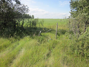 Lush 1/4 Section near Mackay/Chip Lake - Yellowhead County, AB Edmonton Edmonton Area image 6